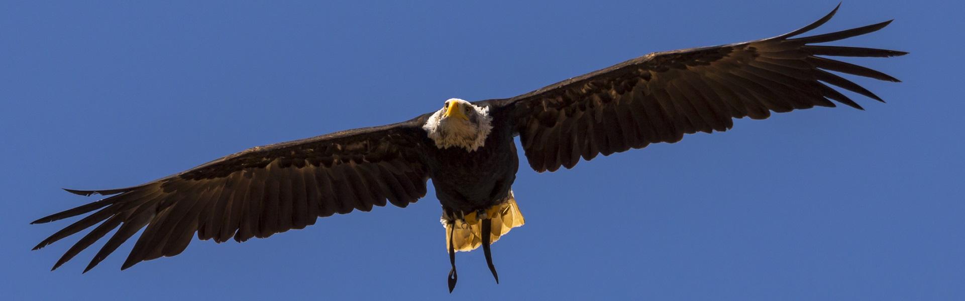 Adler Ötztal